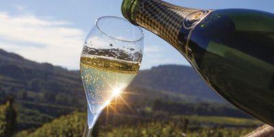 Brunch och vinprovning bland vinodlingarna i Katalonien